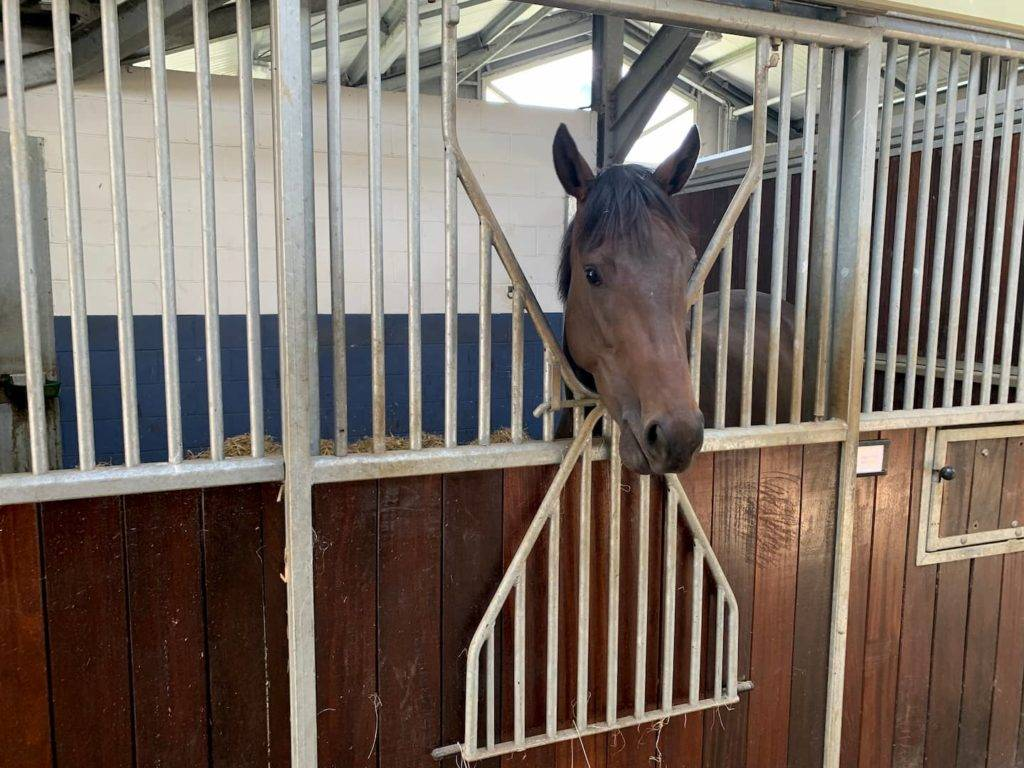 Horse in stables